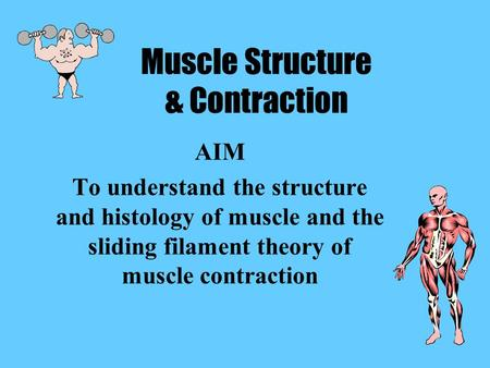 Muscle Structure & Contraction AIM To understand the structure and histology of muscle and the sliding filament theory of muscle contraction.