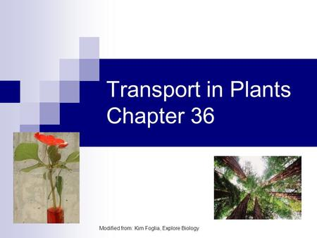 Transport in Plants Chapter 36