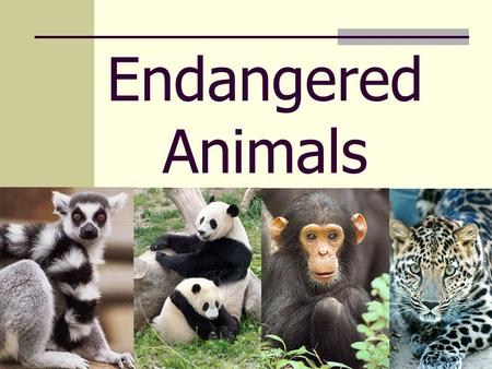 Endangered Animals. Welcome to my presentation I hope that you will enjoy it and learn a lot about this subject.
