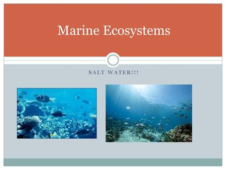 SALT WATER!!! Marine Ecosystems. Life in the Oceans Plankton are the base of the food chain and the most abundant producers.