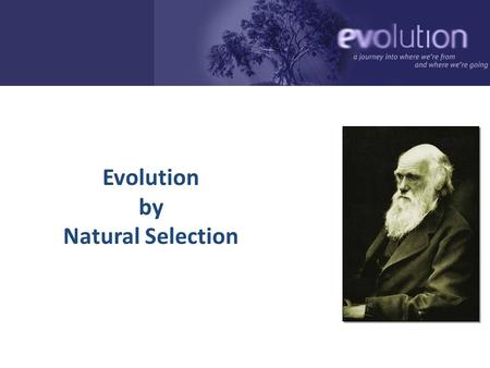 Evolution by Natural Selection 2006-2007 Nothing in biology makes sense except in the light of evolution. -- Theodosius Dobzhansky March 1973 Geneticist,