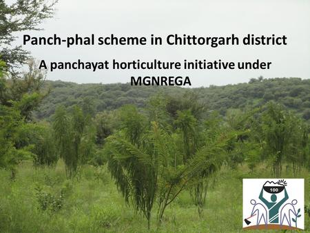 Panch-phal scheme in Chittorgarh district A panchayat horticulture initiative under MGNREGA.