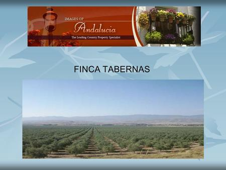 FINCA TABERNAS. The finca has 850 hectares, 500 hectares are planted with olives 7 x 7 with approximately 100,000 highly productive trees. The trees are.