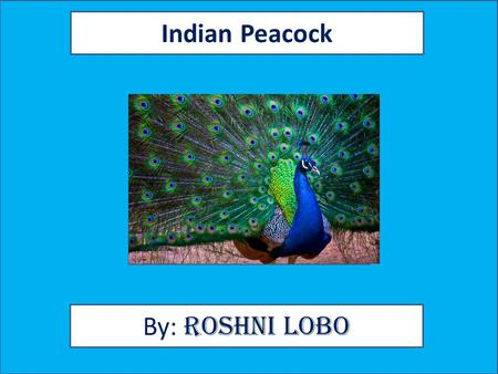 Indian Peacock By: Roshni Lobo. Animal Facts Description Peacocks are types of birds. Besides the Indian peacock there are Congo peacocks and Green peacocks.