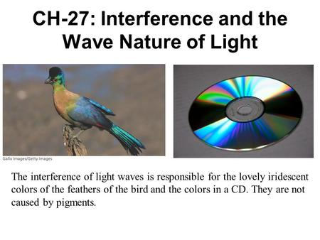 CH-27: Interference and the Wave Nature of Light The interference of light waves is responsible for the lovely iridescent colors of the feathers of the.