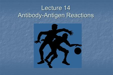 Lecture 14 Antibody-Antigen Reactions. Binding of the epitope in the antigen binding site POOR FIT GOOD FIT antibody combining site antigen determinant.