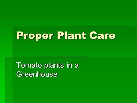 Proper Plant Care Tomato plants in a Greenhouse. Things to consider when planting.  Watering  Temperature  Nutrients.