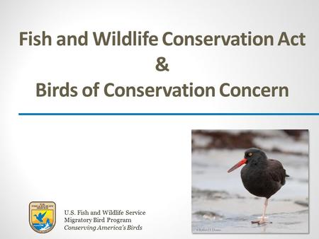 U.S. Fish and Wildlife Service Migratory Bird Program Conserving America's Birds Fish and Wildlife Conservation Act & Birds of Conservation Concern.