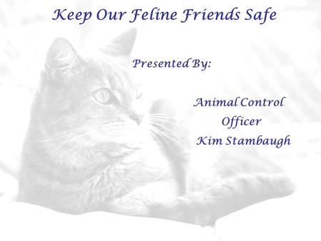 Keep Our Feline Friends Safe Presented By: Animal Control Officer Kim Stambaugh.