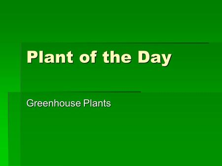 Plant of the Day Greenhouse Plants. Essential Questions  What are various Bedding Plants grown in the greenhouse.