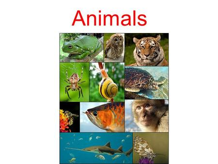 Animals. [x] cat, rabbit, parrot, hamster [P] dog, frog, donkey, dolphin [A] monkey, duck, budgie [ e] zebra, penguin, elephant [i] pig, fish [au] cow,