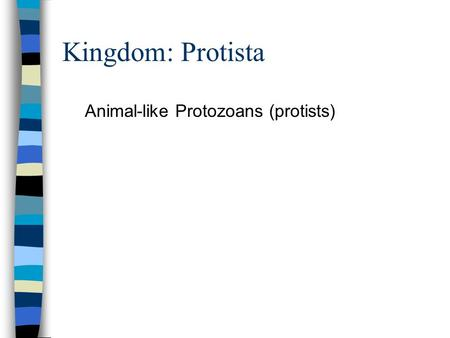 Kingdom: Protista Animal-like Protozoans (protists)