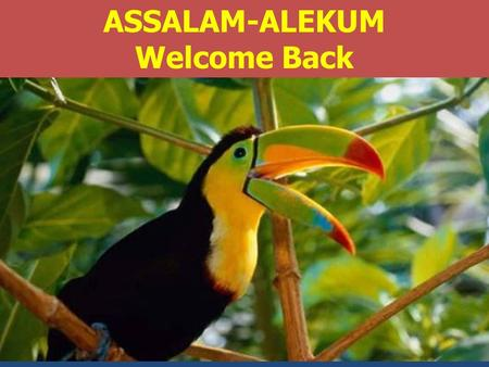 ASSALAM-ALEKUM Welcome Back. DR TAJAMMUL AHMED 1 Topics to be Covered COURSE TOPICS:No of Weeks Contact hours 1.Introduction and orientation.11 2.Alginate.
