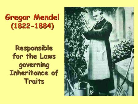 Gregor Mendel (1822-1884) Responsible for the Laws governing Inheritance of Traits.