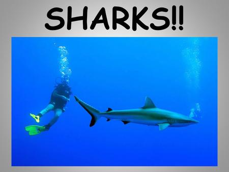 SHARKS!!. What is a shark? they are fish have cartilage instead of bones.