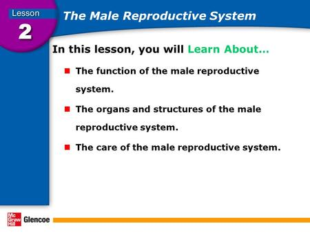 The Male Reproductive System In this lesson, you will Learn About… The function of the male reproductive system. The organs and structures of the male.