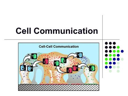 Cell Communication. Communication Cells must communicate with other cells and respond to their environment Basic communication processes are shared across.