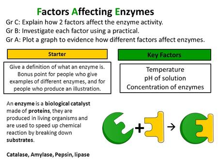 Factors Affecting Enzymes