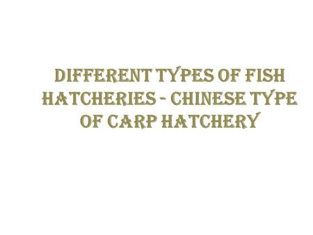 Different types of fish hatcheries - Chinese type of carp hatchery.