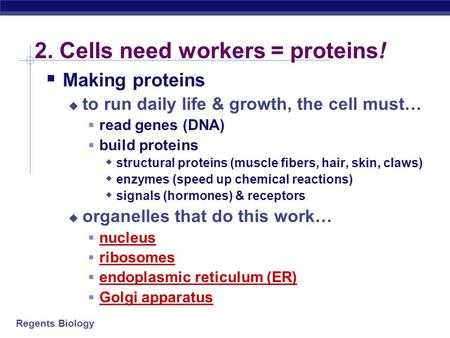 Regents Biology 2. Cells need workers = proteins!  Making proteins  to run daily life & growth, the cell must…  read genes (DNA)  build proteins 