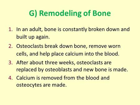 G) Remodeling of Bone 1.In an adult, bone is constantly broken down and built up again. 2.Osteoclasts break down bone, remove worn cells, and help place.