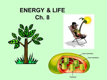 ENERGY & LIFE Ch. 8. _____________ can make their own food using energy from sunlight. Ex: Green plants, a few bacteria AUTOTROPHS Recall from Ecology.