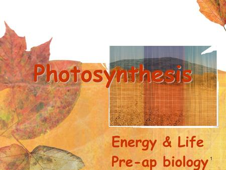 1 Photosynthesis Energy & Life Pre-ap biology. Objectives- Standard 7 Students will be able to Explain how an ATP molecule can gain or loose energy Understand.