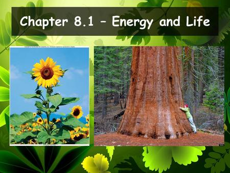 Chapter 8.1 – Energy and Life. Describe the role of ATP in cellular activities. Explain where plants get the energy they need to produce food. Daily Objectives.
