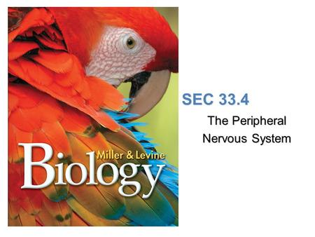 Lesson Overview Lesson Overview The Peripheral Nervous System SEC 33.4 The Peripheral Nervous System.