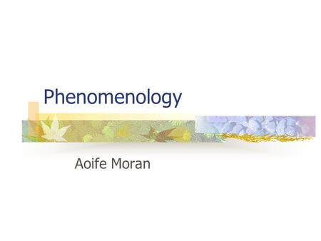 Phenomenology Aoife Moran.