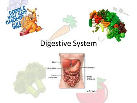 Digestive System. A group of organs that work together to break down food so that it can be used by the body. Digestive Tract: organs the food passes.