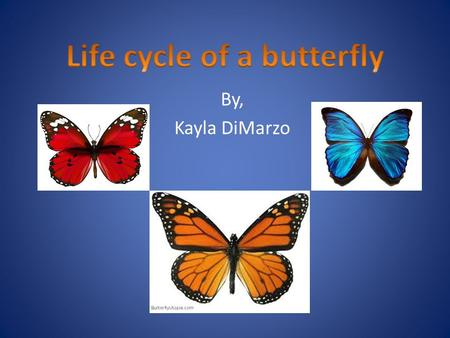 By, Kayla DiMarzo. Complete life cycle of a butterfly 4 Stages of development.