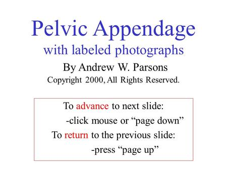 "Pelvic Appendage with labeled photographs By Andrew W. Parsons Copyright 2000, All Rights Reserved. To advance to next slide: -click mouse or ""page down"""