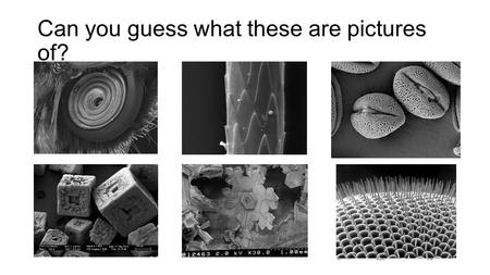 Can you guess what these are pictures of?