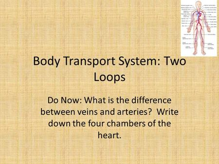 Body Transport System: Two Loops Do Now: What is the difference between veins and arteries? Write down the four chambers of the heart.