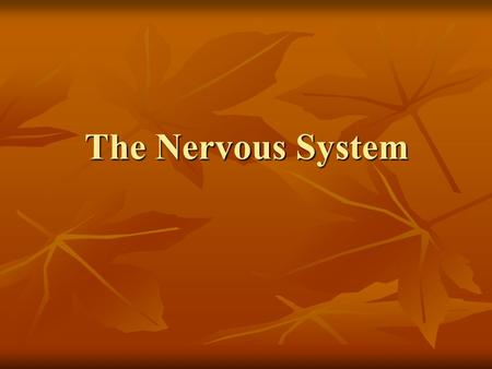 The Nervous System. Organization of the Nervous System Structural Classification Structural Classification Functional classification Functional classification.