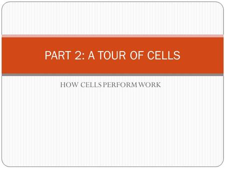 HOW CELLS PERFORM WORK PART 2: A TOUR OF CELLS. CELLULAR RESPIRATION.
