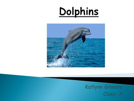Katlynn Gilmore Class: A. Habitat- they live in harbors, bay, logons, gulfs and tributary. Appearance- the Dolphin is not like different mammals, they.