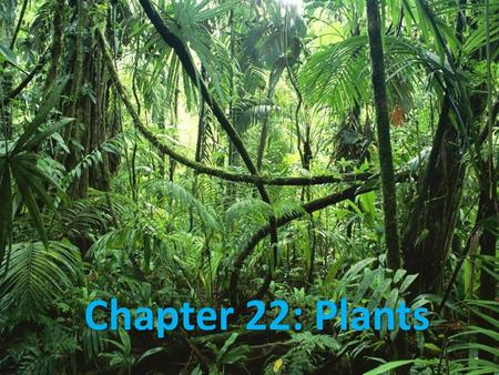 Chapter 22: Plants. What is a Plant? Plant  mostly multicellular organisms of eukaryotic cells with think cell walls and that mostly get energy through.