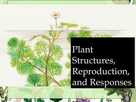 Plant Structures, Reproduction, and Responses What are the 2 Types of Plants? BRYOPHYTES Mosses, liverworts, hornworts NO tissue to transport water and.