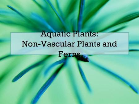 Aquatic Plants: Non-Vascular Plants and Ferns. Evolution of Plants Plants are thought to have evolved from green algae The green algae called charophyceans.