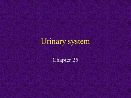 Urinary system Chapter 25. Excretory System The main organs of the excretory system are the bladder, kidneys, liver, lungs, and skin. The excretory system.