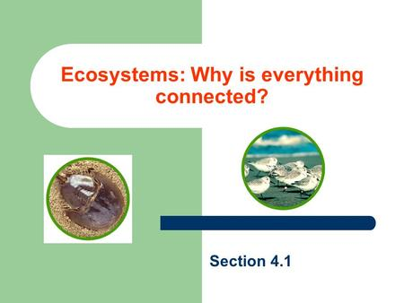 Ecosystems: Why is everything connected? Section 4.1.