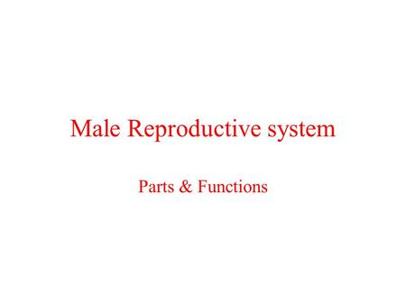 Male Reproductive system Parts & Functions What the male reproductive system does Sperm: Are the sex cells produced by the males testisSperm: Reproduction: