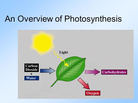 An Overview of Photosynthesis. Photosynthesis is the process by which plants and other producers transform solar energy into the chemical energy of glucose.