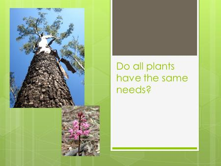Do all plants have the same needs?. Some plants are BIG  Do they need lots of water to drink?  Do they need lots of food to eat?  Do they need lots.