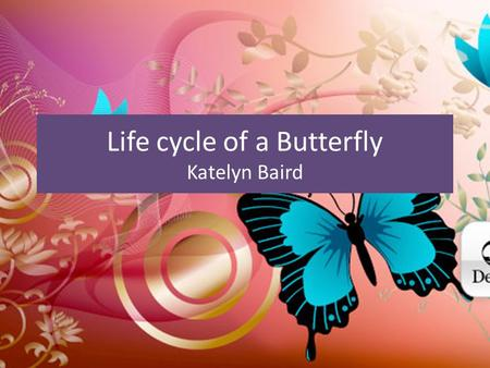 Life cycle of a Butterfly Katelyn Baird Stage One Tiny eggs are laid by the female on a leaf. Female lays between 200-1500 eggs. Most eggs wont survive.