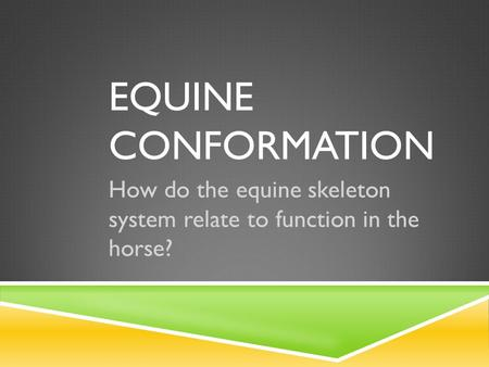 EQUINE CONFORMATION How do the equine skeleton system relate to function in the horse?