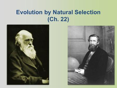 Evolution by Natural Selection (Ch. 22) Charles Darwin 1809-1882 British naturalist Evolution by natural selection Supported the theory with evidence.