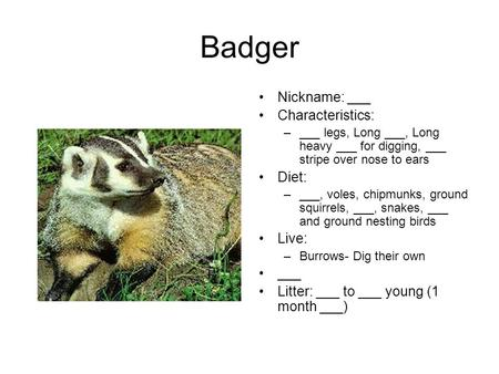 Badger Nickname: ___ Characteristics: –___ legs, Long ___, Long heavy ___ for digging, ___ stripe over nose to ears Diet: –___, voles, chipmunks, ground.